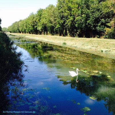 Idylle mit Schwan - am Kanal der oberen Seine