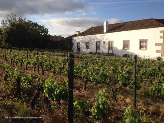 Hinter Manuels Anwesen wachsen die Trauben für seinen Wein