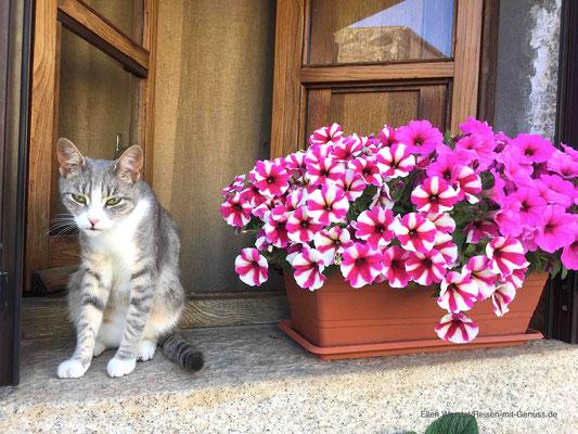 """Neugierig: Katze auf ihrem """"Wachposten"""""""