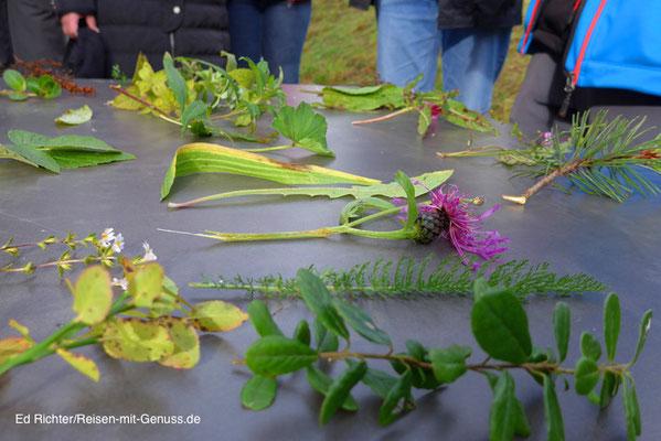 Vor der Wanderung erklärt Hans erst die Allgäuer Pflanzenwelt
