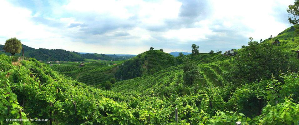 Weinberge in der Gemeinde Valdobbiadene: Die wohl schönste Region im Prosecco-Land