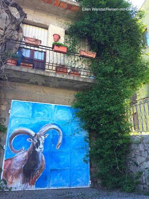 Wild: Es gibt tatsächlich noch Mufflons in den Bergen Sardinens