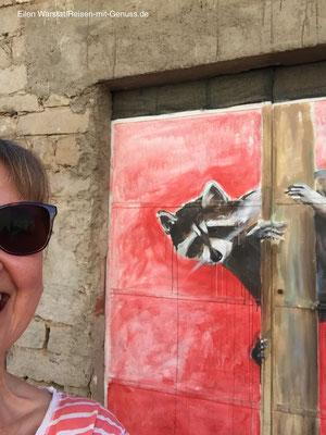 Wir stehen beide auf Rot: Selfie mit Waschbär
