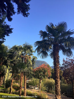 Mediterran: In Meran flaniert man unter Palmen