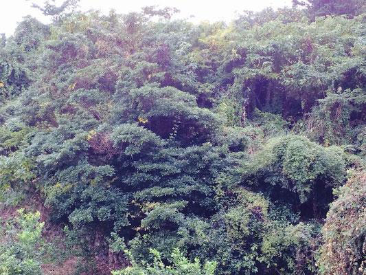 まさにジャングル