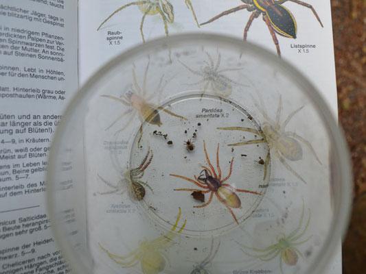 Eine unbestimmte Spinne - wer weiß mehr? Bitte melden!