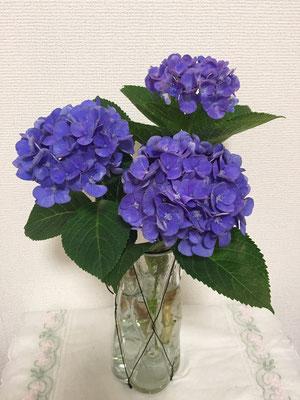 2017/7/2 紫陽花