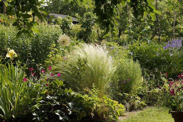 Gartenansicht mit Federgras, Lichtnelke, Lavendel