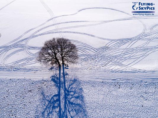 Winterstimmung aus der Luft mit Baum im Schnee