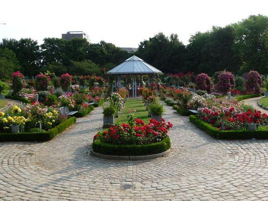 Rosengarten in Planten un Blomen | Reinhard Garber GbR