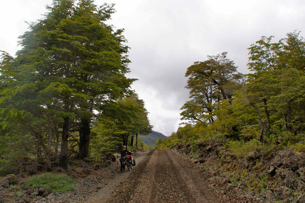 Riding through Nationalparc Conguillo.