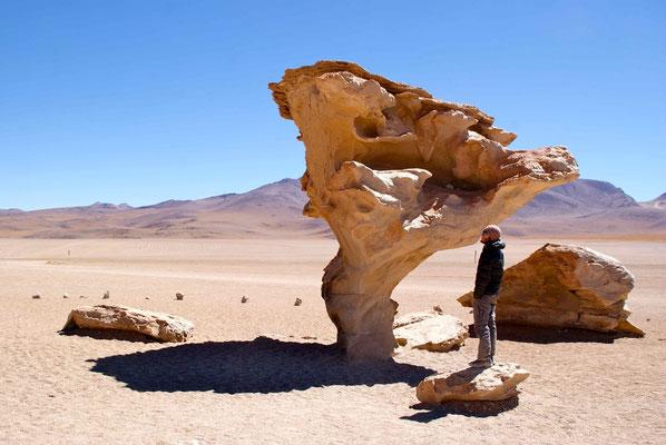 Arbol del Piedra