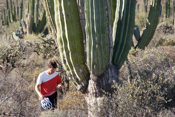 Sam and a big Cardòn Cactus