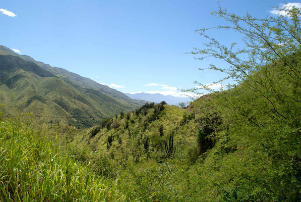 Just beautiful the Andes of Colombia.