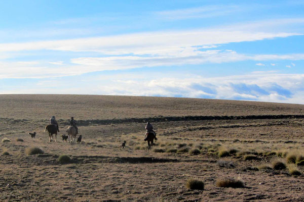 Gautchos (Patagonien Cowboys) riding in the prairie :-)
