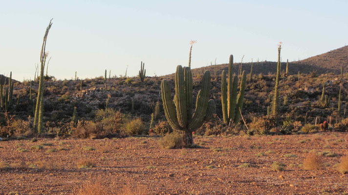 First Cactus on the road.