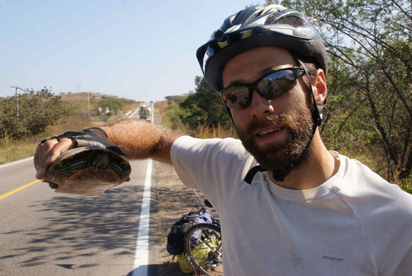 Julien saved a Turtle on the road.