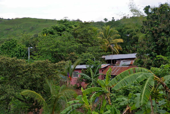 Houses in the jungle.