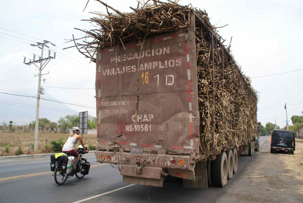 Truck loaded with sugercane.