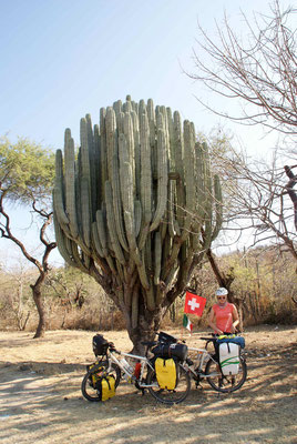 Cactus shooting.