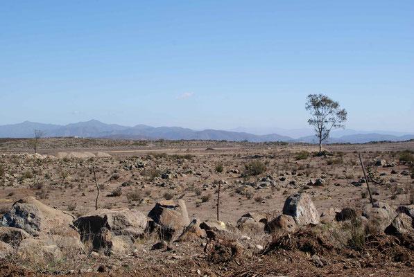 Baja California - desert.