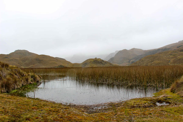 Cajas is famous for lot's of lakes and a wet clime.