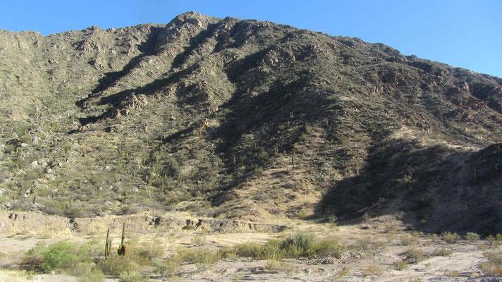 Auch in der argentinischen Pampa gibts Kakteen en masse. // Desert of cactus en northern Argentina.