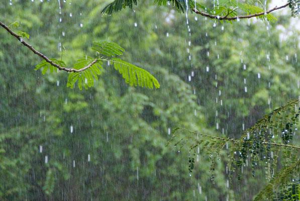 The rainy season starts.