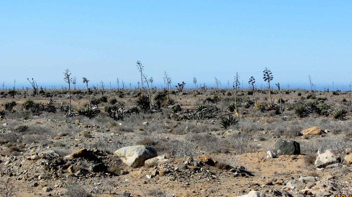 Landscape after El Rosarito
