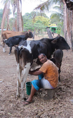 Deyton gave us  fresh milk from this cow.