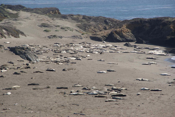 Elephant Seals, Big Sur view point