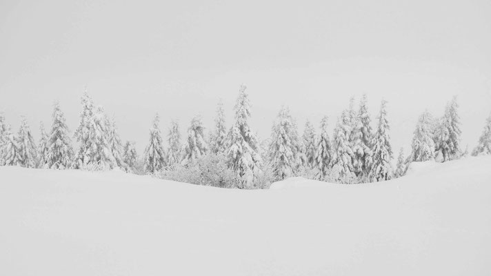 Snow, white, snow