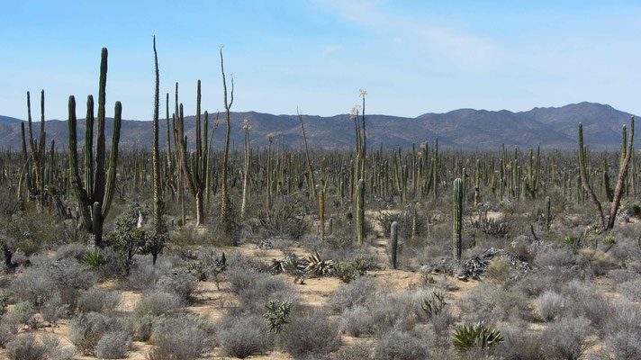 Big, small, fat, thin... all kinds of cactus.