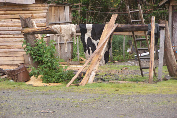 A house on the Carretera Austral, drying cow skin.