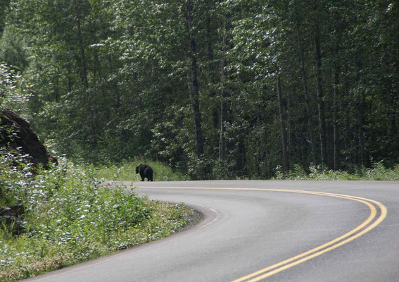 Big black bear in front of us