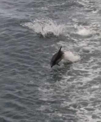 Delfine gesichtet