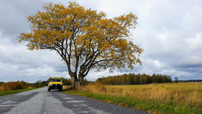 Herbst in Estland