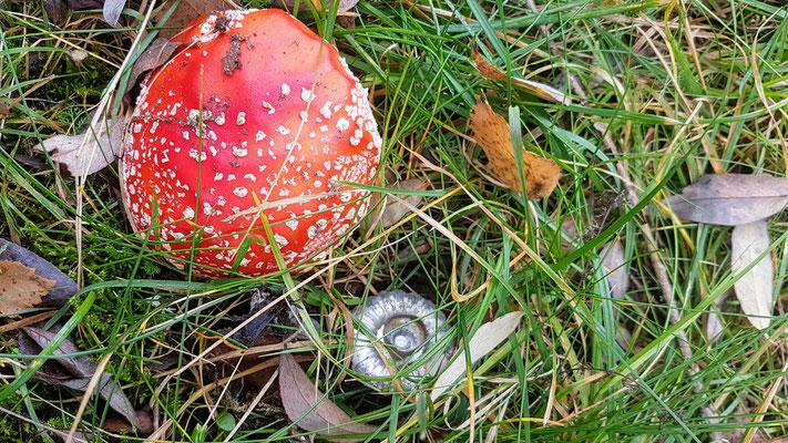 Pilze sammeln ist in Estland ganz gross
