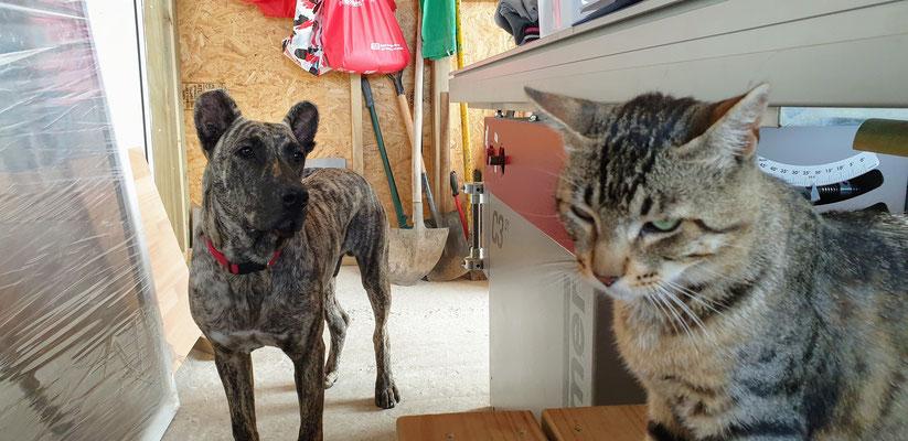 Che und Tiger auch immer mit dabei.
