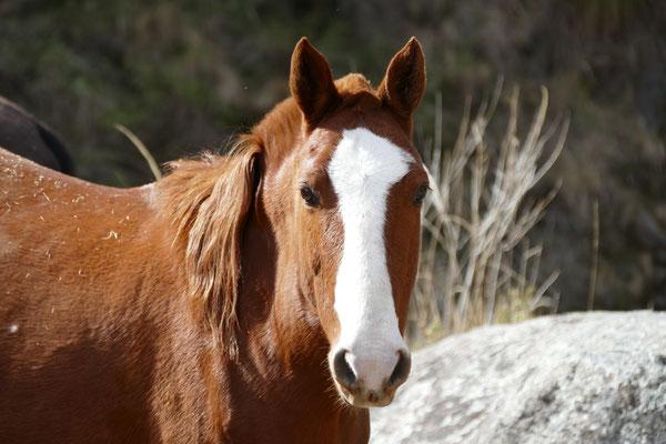 Auf dem Heimweg treffen wir Pferde....
