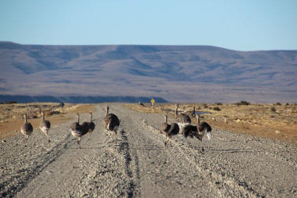 Begleiter auf der Ruta 40 in Argentinien.