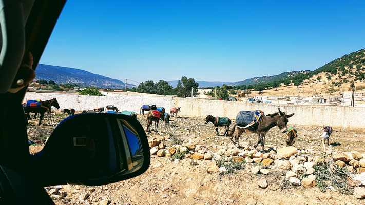 Parkplatz der Esel beim Souk in Imi N'Tlit