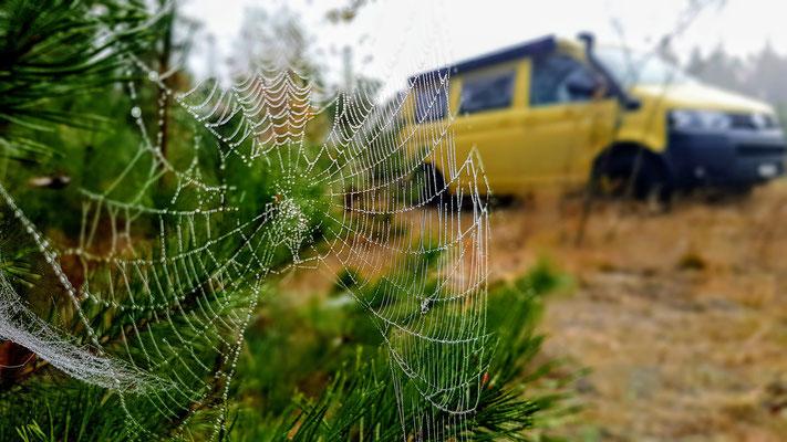Die Spinnen doch