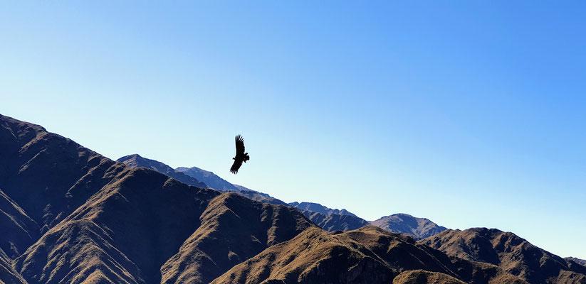 Condor Flugshow bei der Estación 4