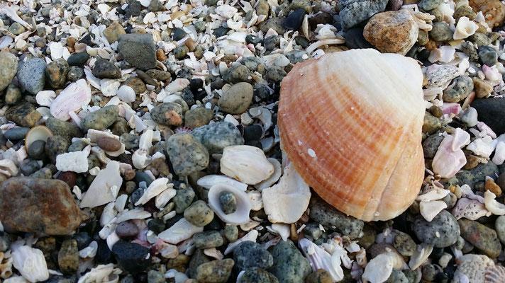 Es gibt nicht nur Muscheln am Strand...