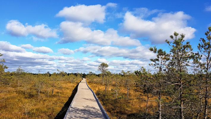 Viru Bog Trail...