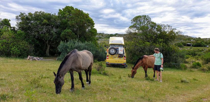 Besucher in Salto del Penitente... ein paar Pferde...