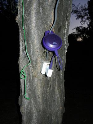 Strom kommt in Chile vom Baum. Unsere Busch-Soundbox am Aufladen...