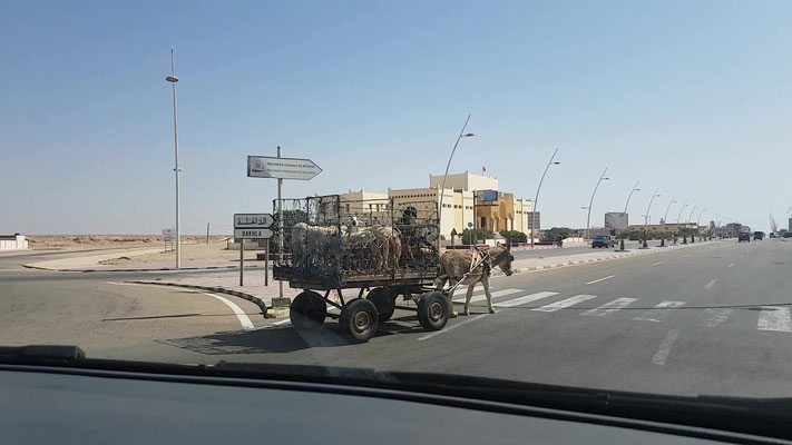 Im Kreisverkehr in Marokko... keine Seltenheit.