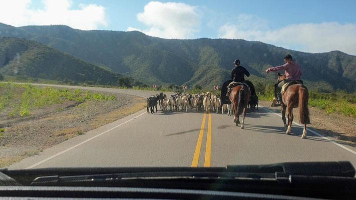 Die Guachos sind unterwegs nach Chilecito...